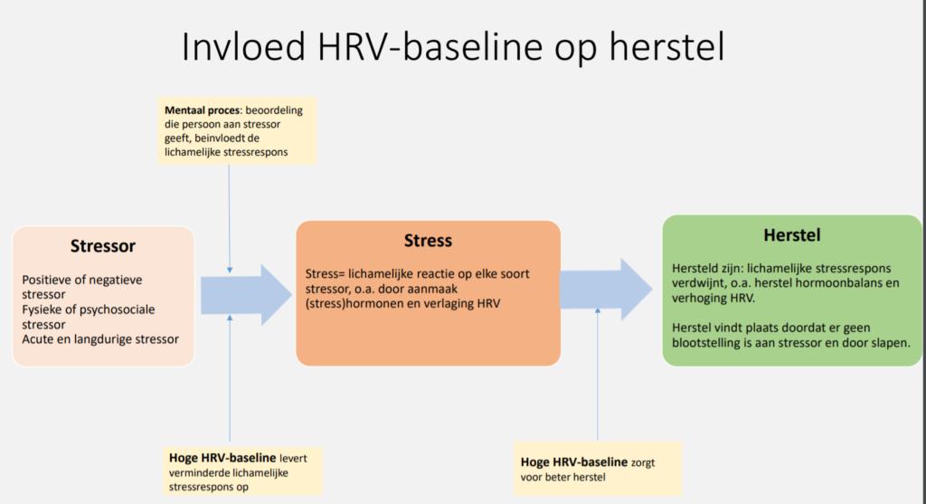 HRV baseline en herstel